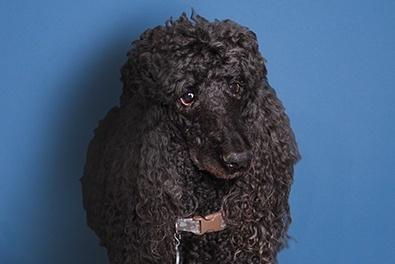 moses-vanderbloemen-chief-canine-officer-vanderbloemen-search-group